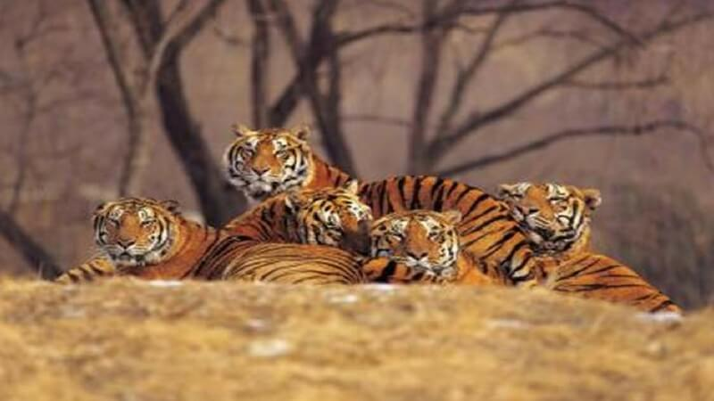 No Endangered Species without humans