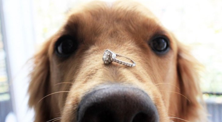 Dog-Throws-Up-Wedding-Ring-That-s-Been-Missing-for-6-Years-448985-2