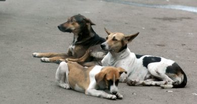 30 Dogs Unearthed In Bangalore, One Miraculously Survives