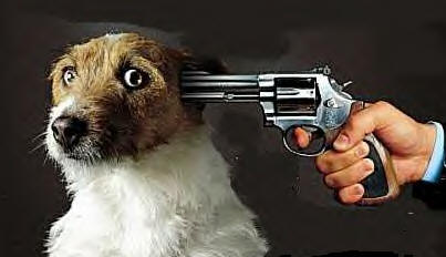 Yet Another Cruelty On Animals, Man Shoots Dogs With An Air Gun!!