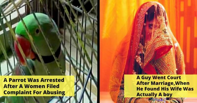 A Parrot Was Arrested After A Women Filed Complaint For Abusing