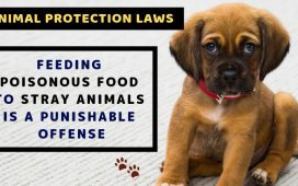 Animal protection laws