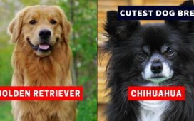 CUTEST DOG BREEDS