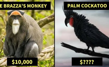 Exotic and Expensive Pet Species
