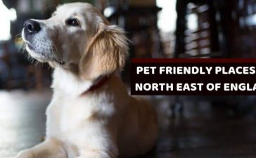 DOG FRIENDLY PLACES DOG Lovers