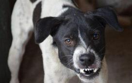 Dog Bite Compensation