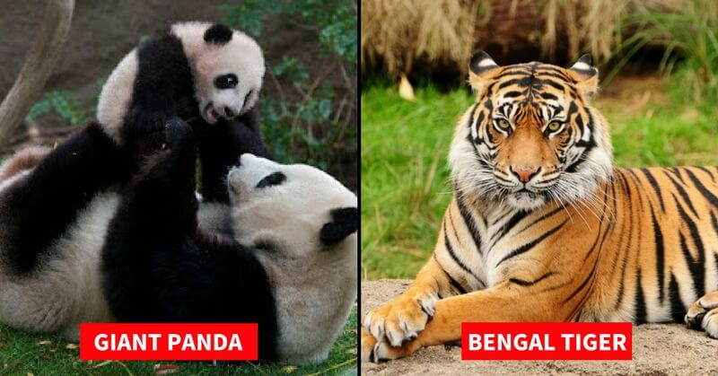 List of Endangered Species