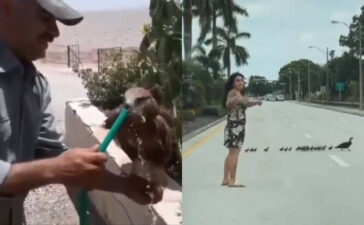 Instances Of People Rescuing Animals