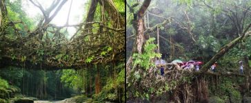 Meghalaya Living Root Bridges