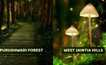Incredible Places In India That Glow In The Dark