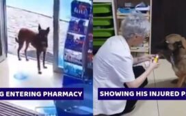Street Dog Visiting Pharmacy