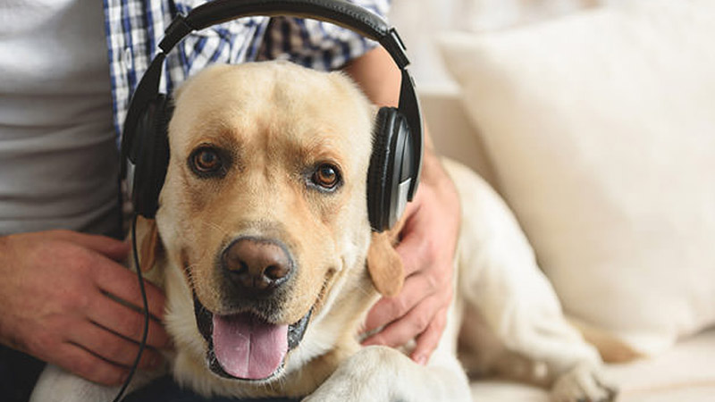 The power of listening to dogs