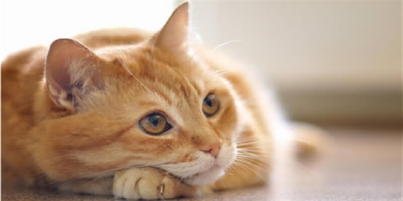 enzyme cleaner for cat urine reviews